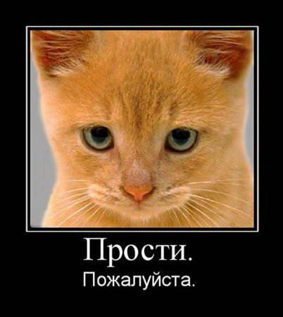 Фото кот просит прощения