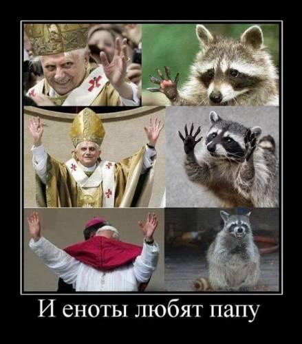 Сходство Папы Римского с енотом