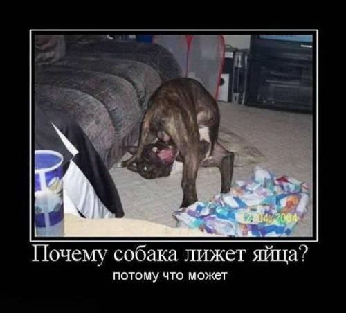 Эксперты нашли новые останки людей из Боинга на Донбассе, а местные жители вернули некоторые личные вещи жертв, - глава миссии - Цензор.НЕТ 5966