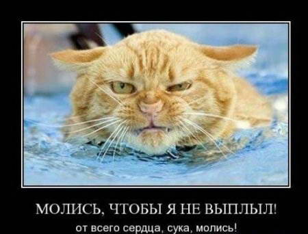 Демотиватор злой кот в ярости